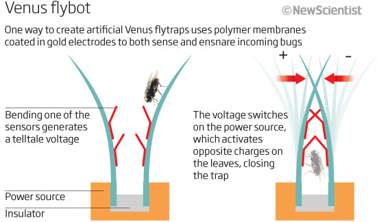 Venus Flytarp Insect Eating Robot2 Robot Venus Flytrap catches and eats bugs for fuel