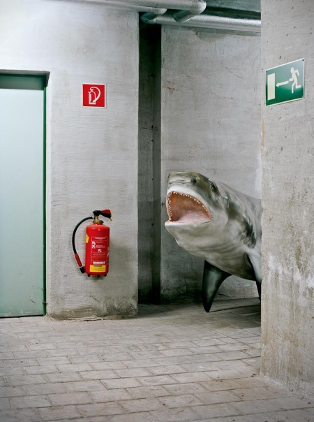 Basement shark 450x604 Basement Shark!